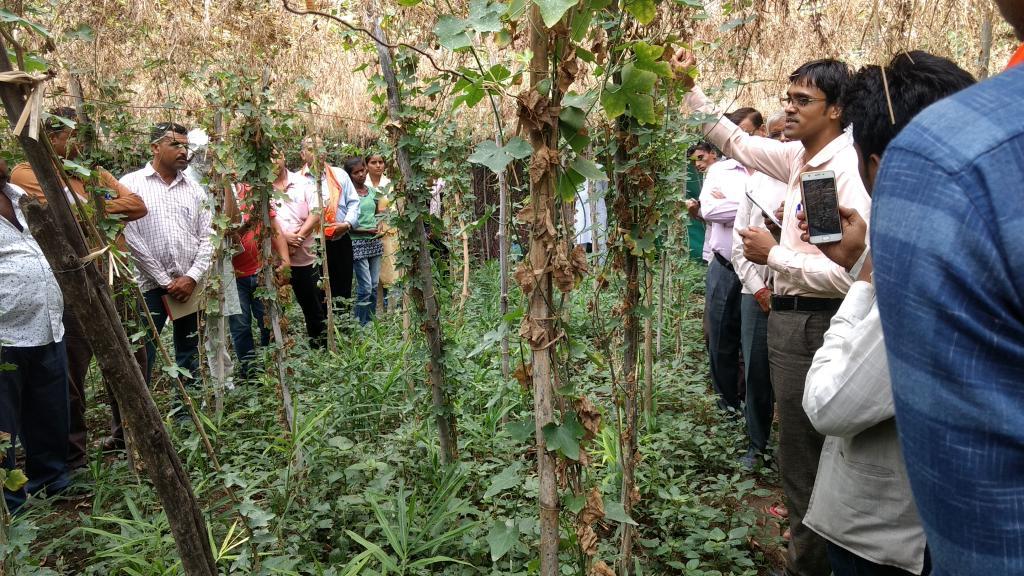 आकाश चौरसिया मल्टीलेयर खेती के लिए किसानों को प्रेरित करते हैं और उन्हें प्रशिक्षण भी देते हैं।