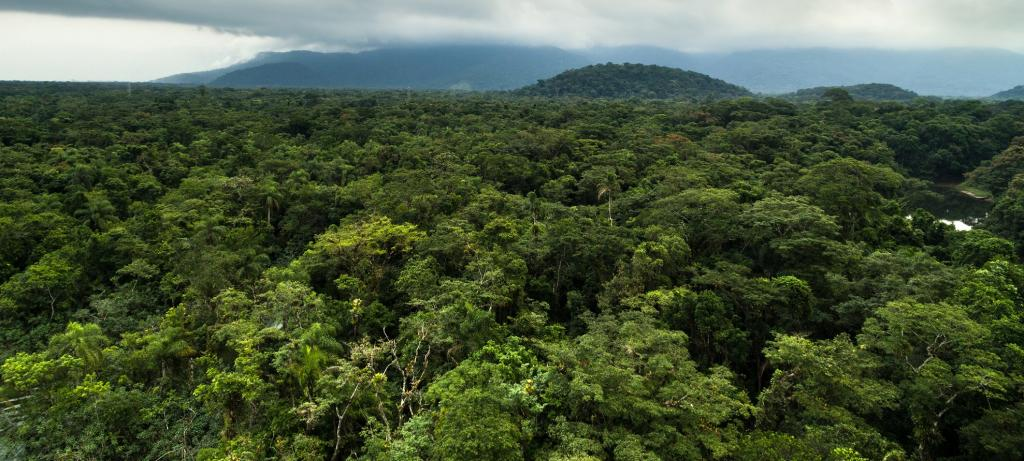 A rain forest. Photo: Getty Images
