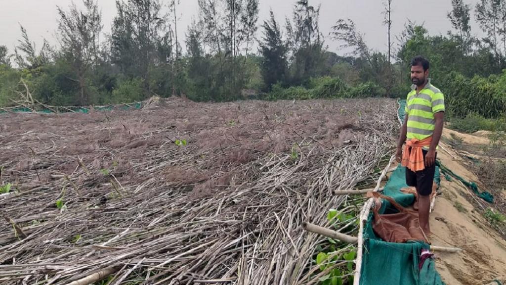 A Paan farmer from Dhinkia village inspecting his flattened betel vineyards Photo: Ashis Senapati