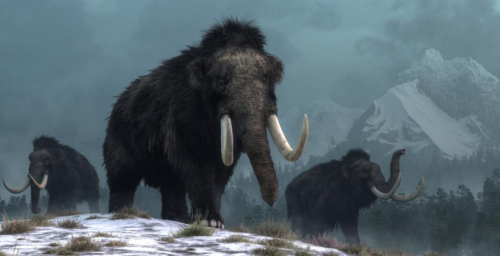 Woolly Mammoths. Photo: Getty Images