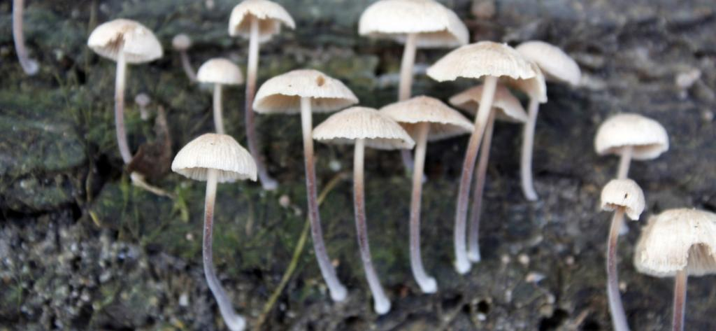 Mushrooms growing on decaying wood. Photo: Getty Images