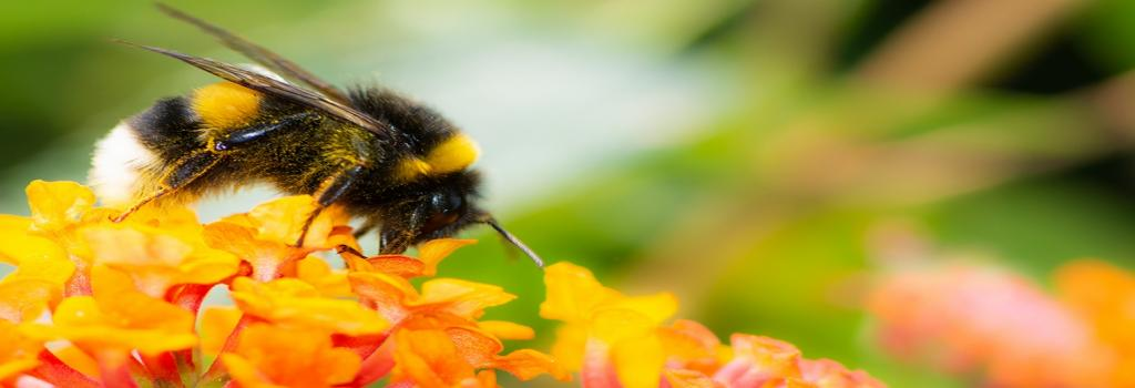 How loss in bumblebee's diet can impact humans. Photo: Getty Images