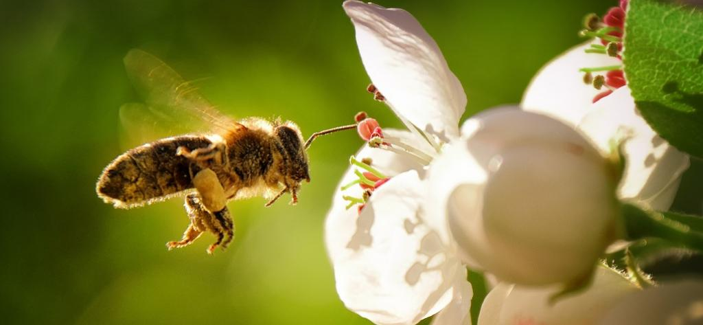 World Bee Day: 10 facts about this pollinator