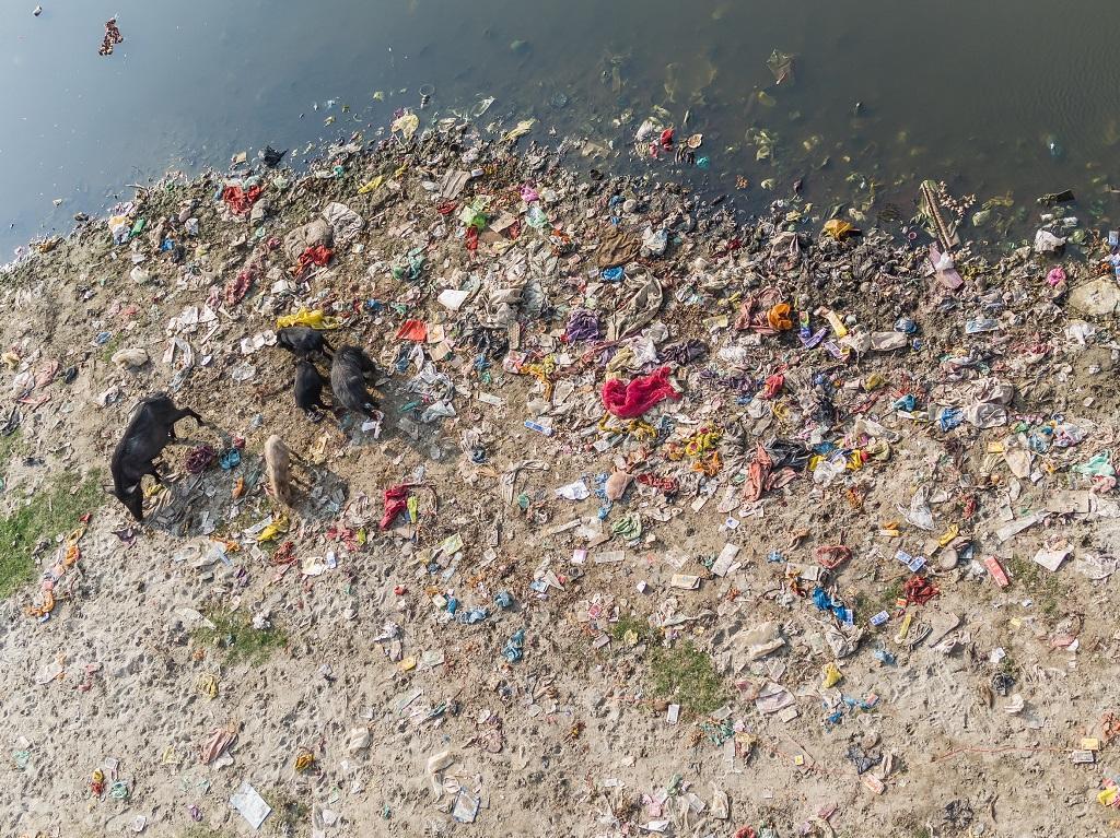 Yamuna highly polluted