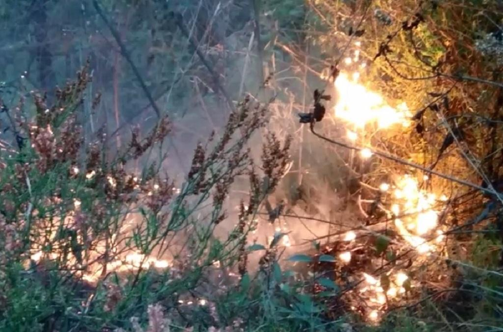 बागेश्वर के जंगल में लगी आग। Photo: Varsha Singh