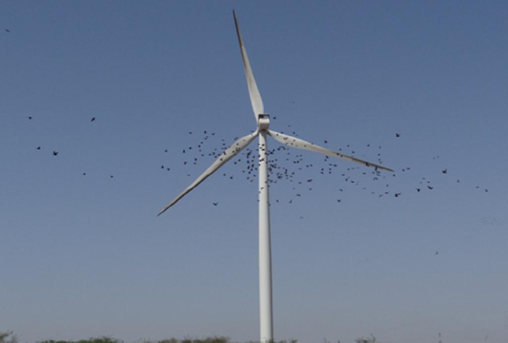 सामाख्याली में पवन-चक्की के आसपास उड़ते हुए पक्षी  (फोटो: मोहम्मद समसूर अली)