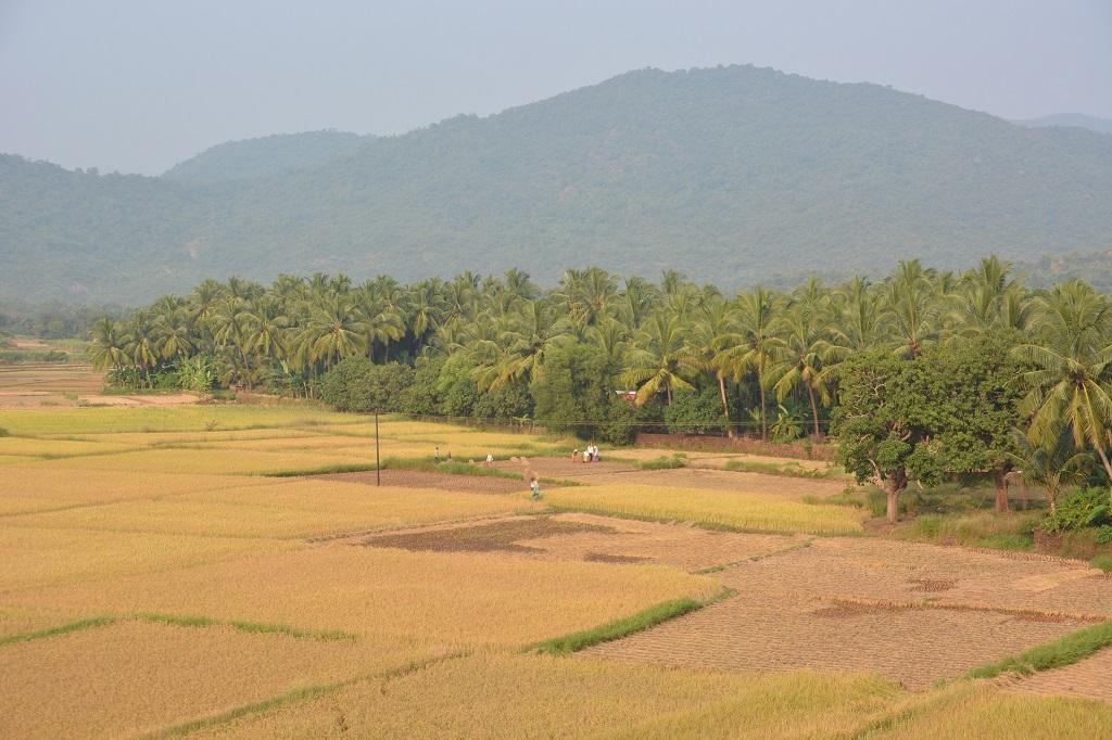 Goa's first white paper on livelihoods can help effective state planning. 