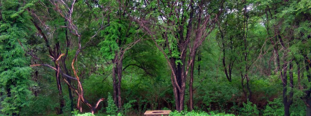 The Abujmad forest in Chhattisgarh. Photo: Wikimedia Commons