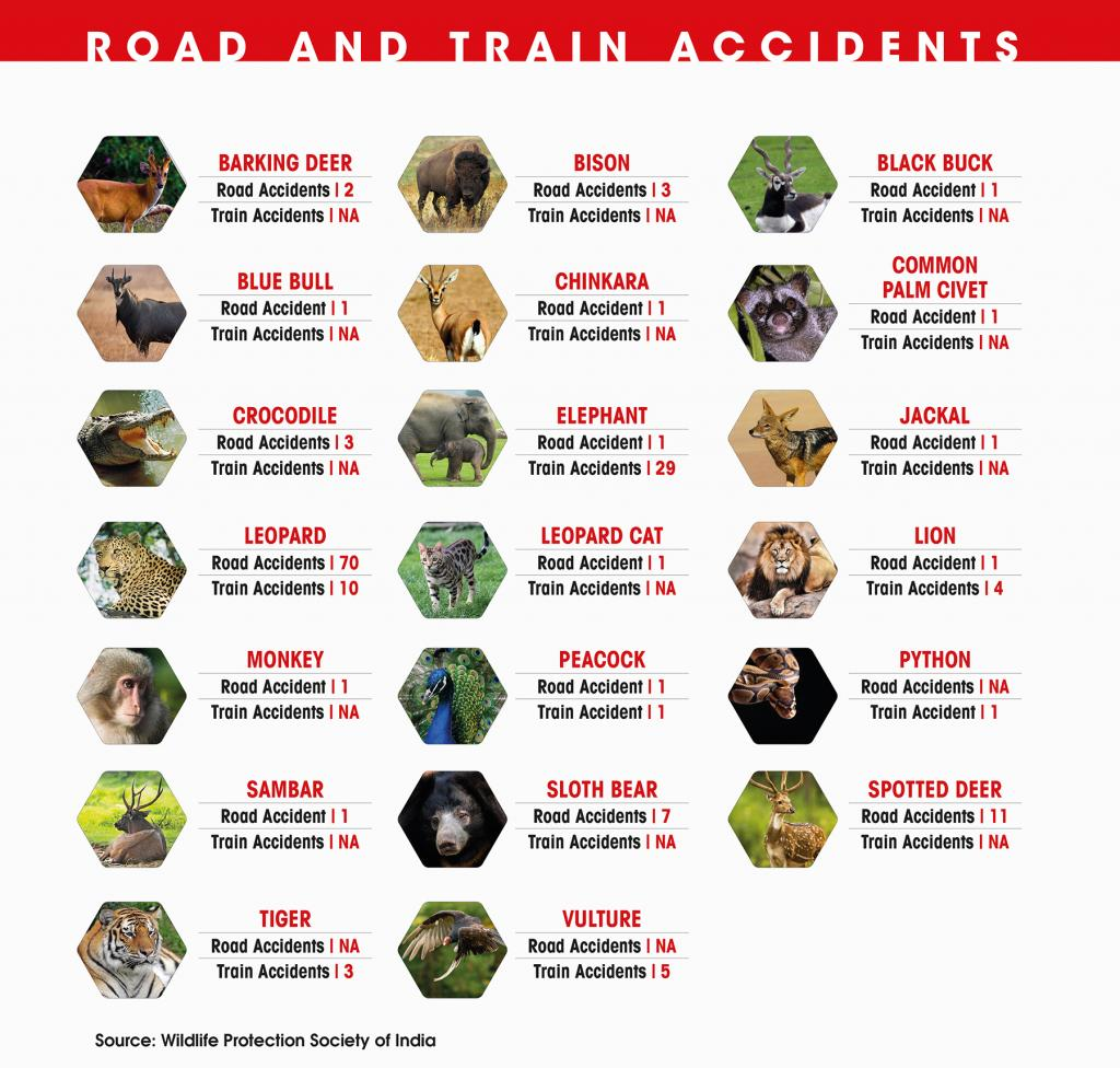 Animal deaths in train and road accidents. Credit: State of India's Environment 2019 in Figures
