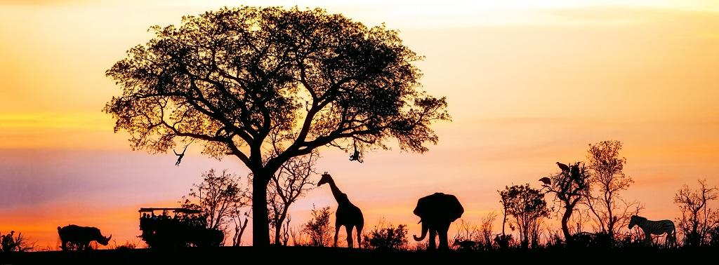 Wildlife is the single biggest driver for Africa's tourism growth. Photo: Getty Images