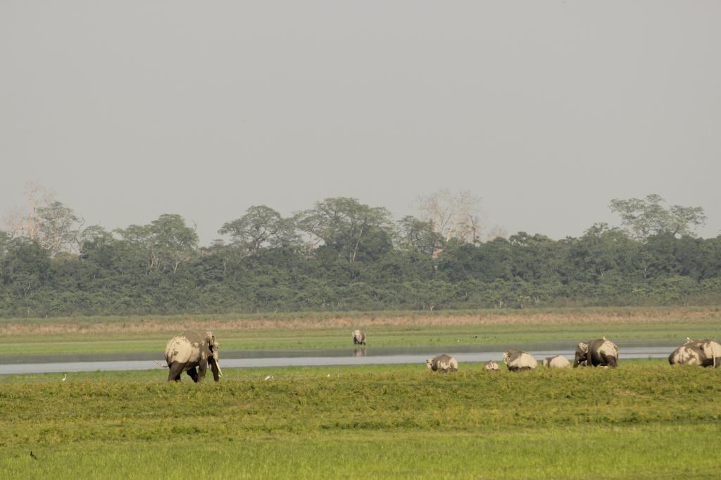 Photo: Kumar Sambhav Shrivastava