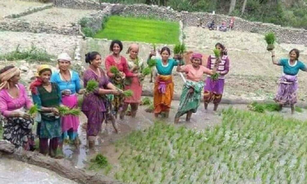 देर से ही सही, बारिश के इंतजार में धान की बुआई करती उत्तराखंड की महिलाएं। फोटो: त्रिलोचन भट्ट
