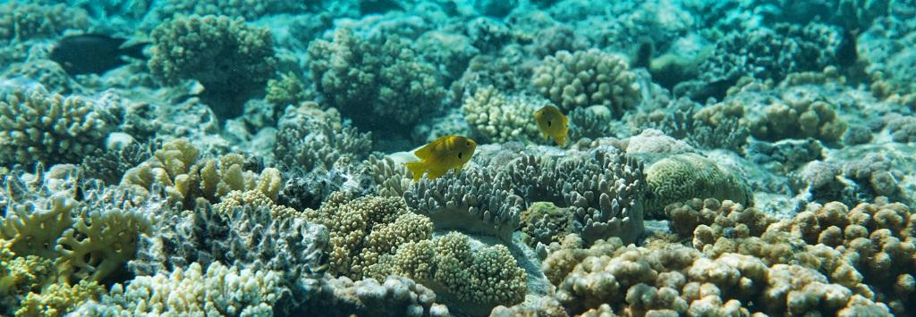 Only three per cent of the oceans have not been altered by human activity, according to the report. Photo: Getty Images