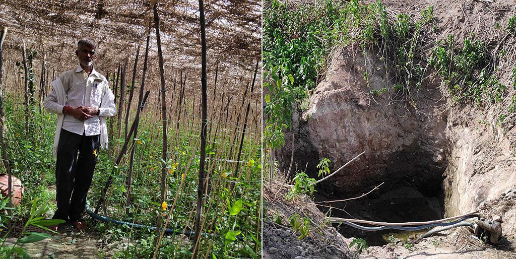 दयाशंकर चौरसिया 40 साल से पान की खेती कर रहे हैं। उन्हें लगता है कि आने वाले 15-20 साल में यह खेती खत्म हो जाएगी। छत्तरपुर रोड के पास बने बरेजों के बाहर खोदे गए गड्डे में पानी सूख चुका है (दाएं)