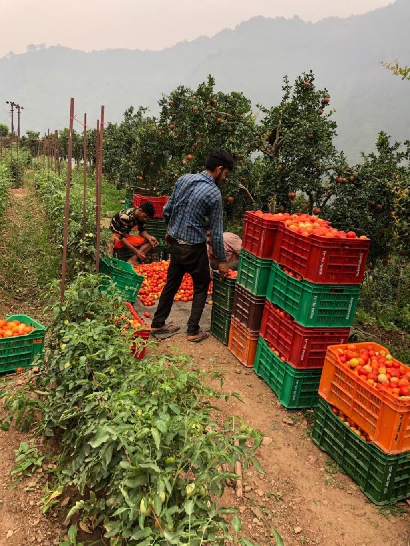 खेत पर ही सब्जी बेचने का भी काम करते हैं प्रेम चंद। फोटो: वर्षा सिंह