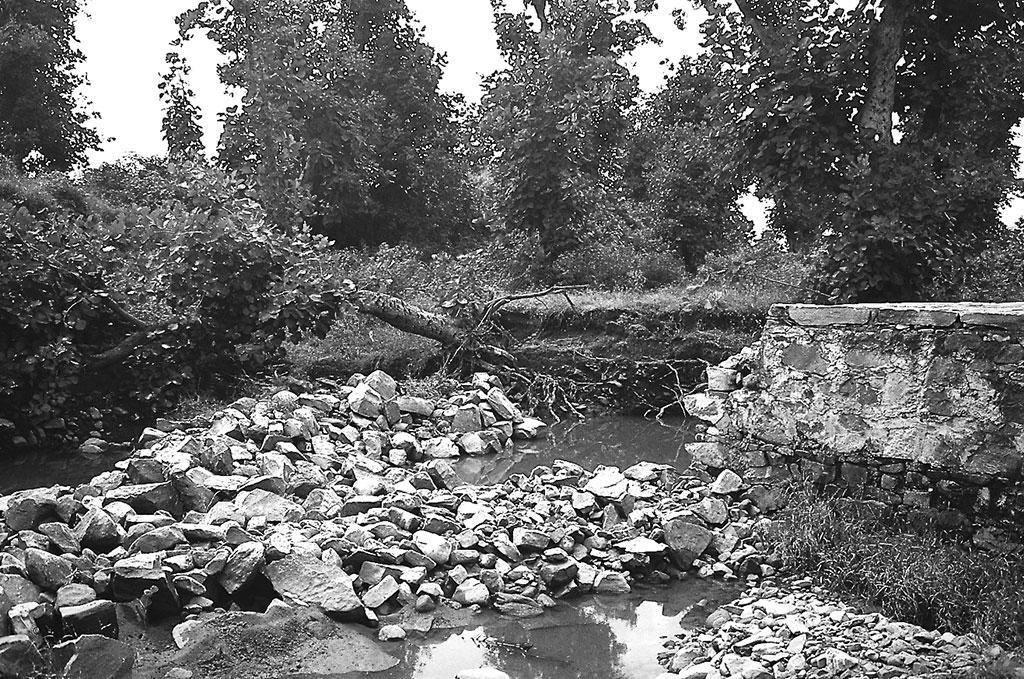 गोपालपुरा में मिट्टी बहने से गिरा पेड़। पहले खेतों से काफी मिट्टी बह जाती थी और उनमें नमी रखने की क्षमता कम थी। लेकिन जोहड़ों के बनने के बाद मिटृी काफी समय तक नम रहती है (गणेश पंगारे / सीएसई)