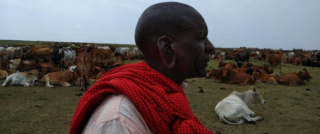 A Masai herder stands along with his herds. Photo: Jitendra