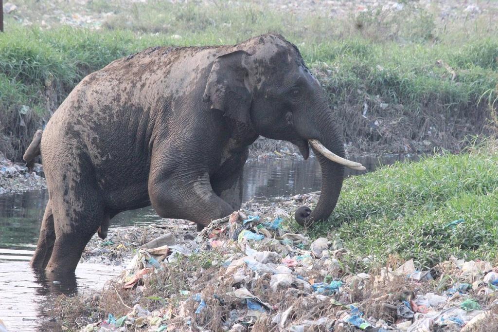 वन संरक्षक डॉ. पराग मधुकर धकाते द्वारा सोशल मीडिया पर शेयर की गई तस्वीर।