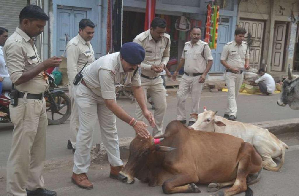 आवारा पशुओं को रेडिएम लगाते अशोकनगर जिला पुलिसकर्मी। फोटो: मनीष चंद्र मिश्रा