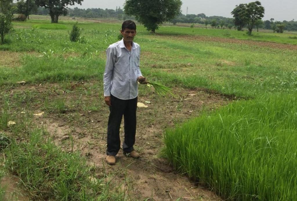 जम्मू कश्मीर के सांभा जिले का किसान तीरथ राम अपने खेत में खराब हो रही फसल दिखाते हुए।