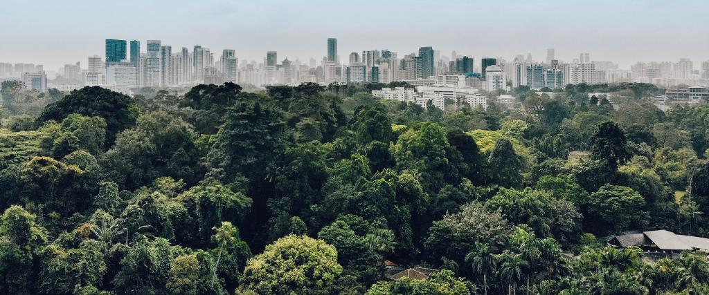 This Singapore Botanic gardens. Around 35 million hectares of forest were lost to urban expansion between 1992 and 2015, according to a new study. Photo: Getty Images