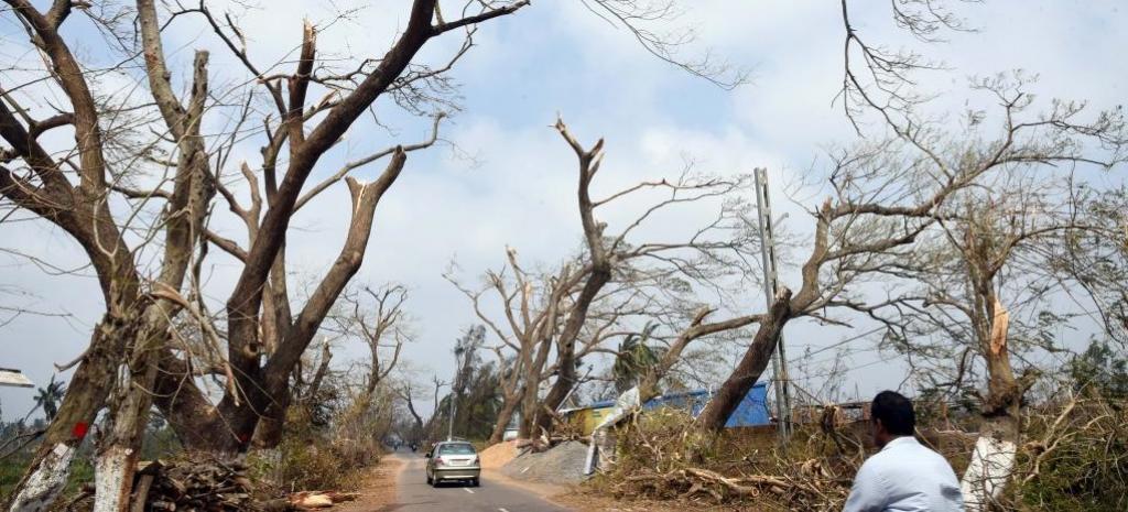 Cyclone Fani uprooted lakhs of trees in Odisha. Photo: Arabinda Mahapatra
