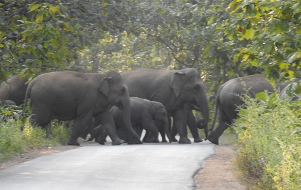 छत्तीसगढ़ की राजधानी रायपुर से कुछ ही दूरी पर दिखाई दे रहा हाथियों का झुंड। फोटो: बलराम साहू
