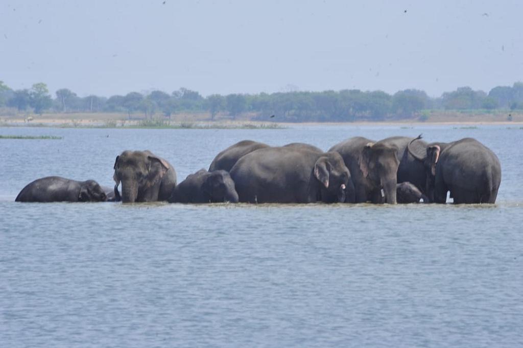कोडार बांध के पानी में नहाते हाथी। फोटो: बलराम साहू