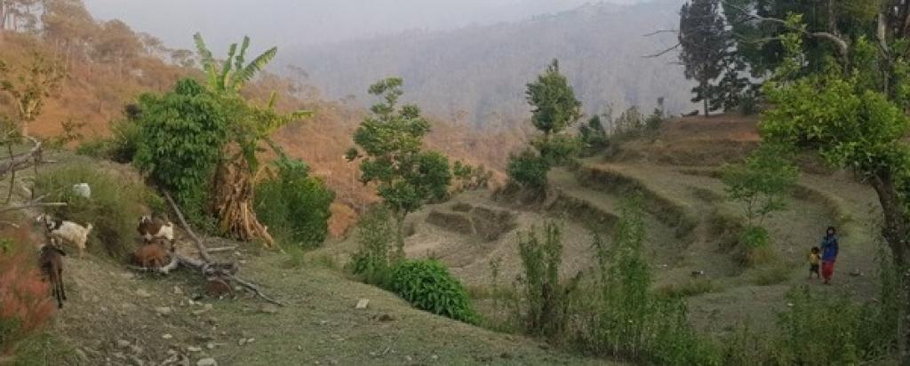 Increasing land abandonment in Aiddhungra village in Nepal's Dadeldhura district. Photo: Lipy Adhikari