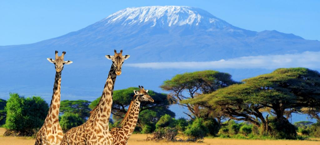 Three giraffes in the shadow of Mount Kilimanjaro in Kenya. The giraffe was included in Appendix II of CITES on August 22. Photo: Getty Images