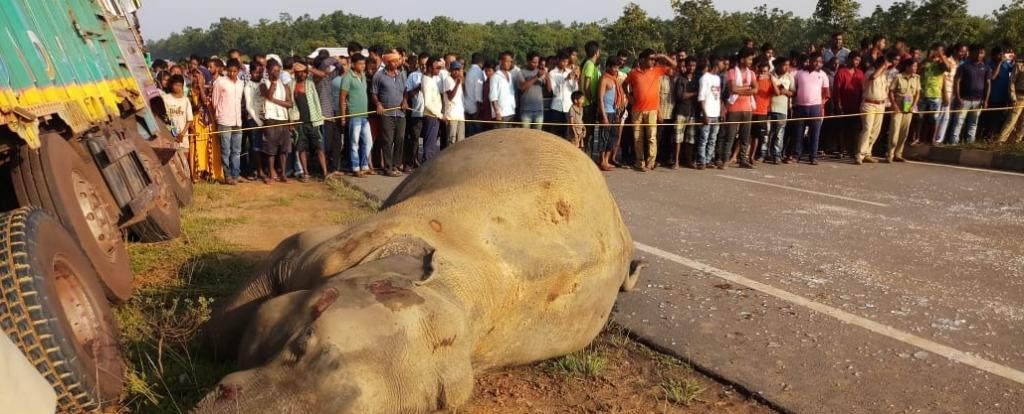 The 160 kilometre National Highway 20 where the elephants were run over, runs from Keonjhar to Paradip. Photo: Ashis Senapati