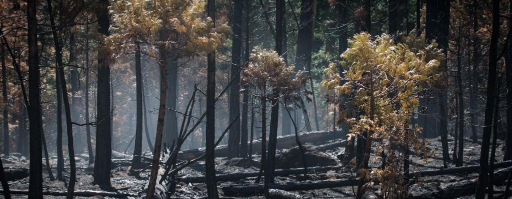 'The burning of the Amazon will not alter wind patterns'
