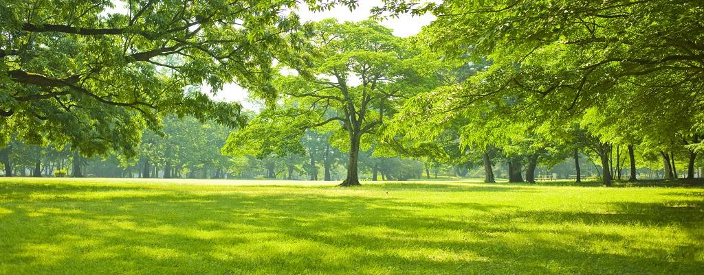 Trees Likely To Absorb Co2 Only Till 2100 Study