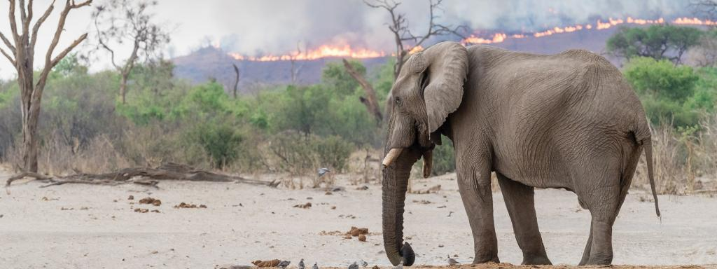 There are currently more fires in Africa's savannahs than in the Amazon. Photo: John Ceulemans / shutterstock