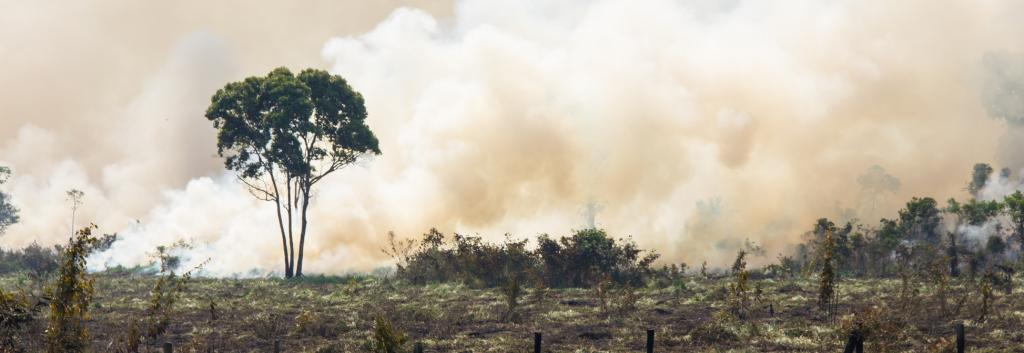Fire in the Amazon. Photo: Getty Images