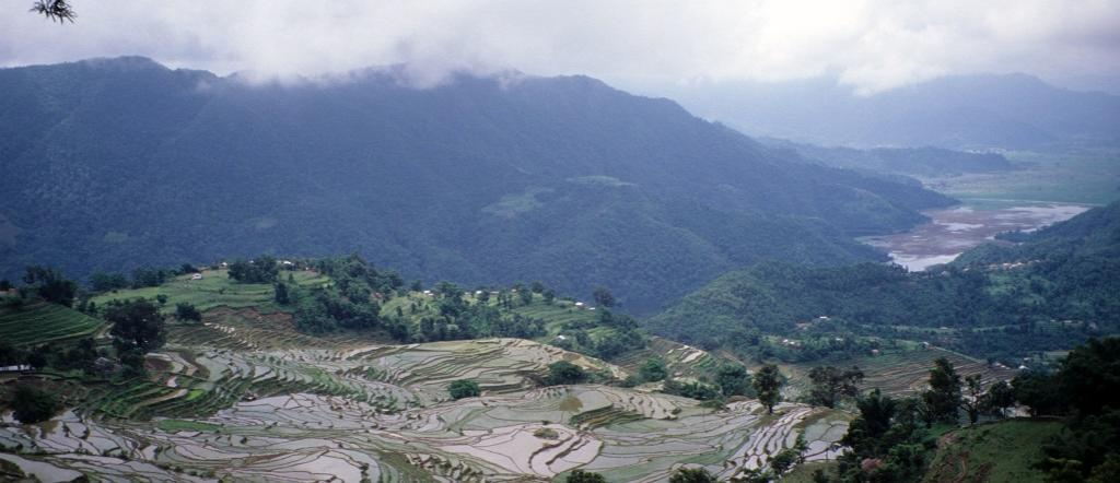Rice terraces near Pokhara, Nepal