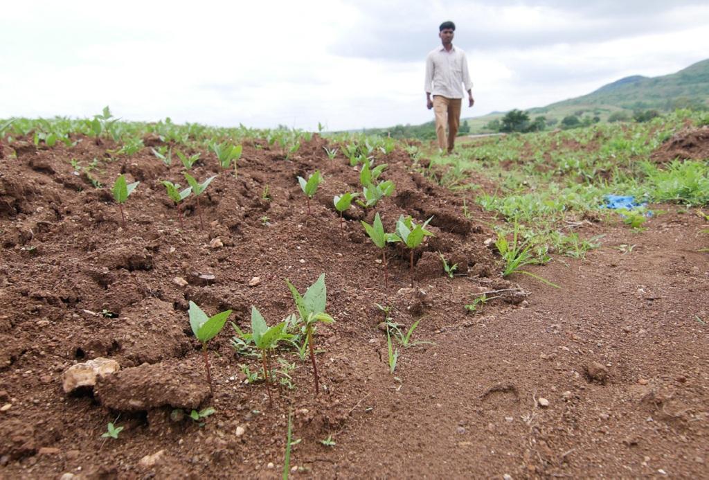 महाराष्ट्र के धुले जिले में जमीन खेती लायक क्षमता खोती जा रही है। फोटो: अर्णव
