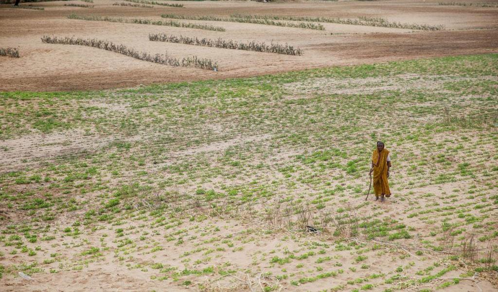 Sand over fields in Ananthapuramu district in Andhra Pradesh