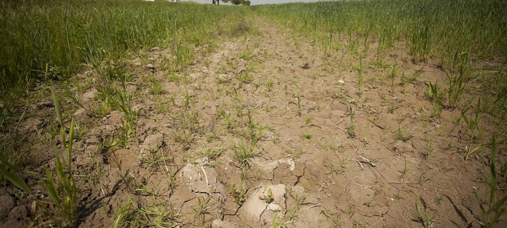 Soil affected by high salinity in the Syrdarya Province of Uzbekistan. Photo: IFPRI/ Flickr