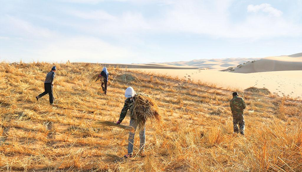 Straw checkboards made from agricultural waste have helped China tame its Tengger desert