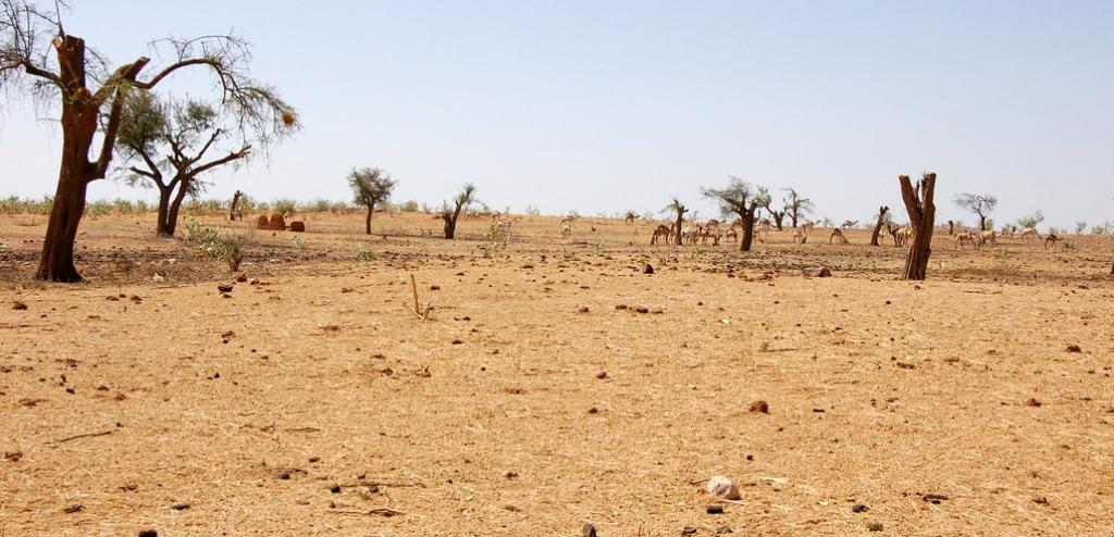 A view of the degraded land in Darfur, Africa. Photo: FAO