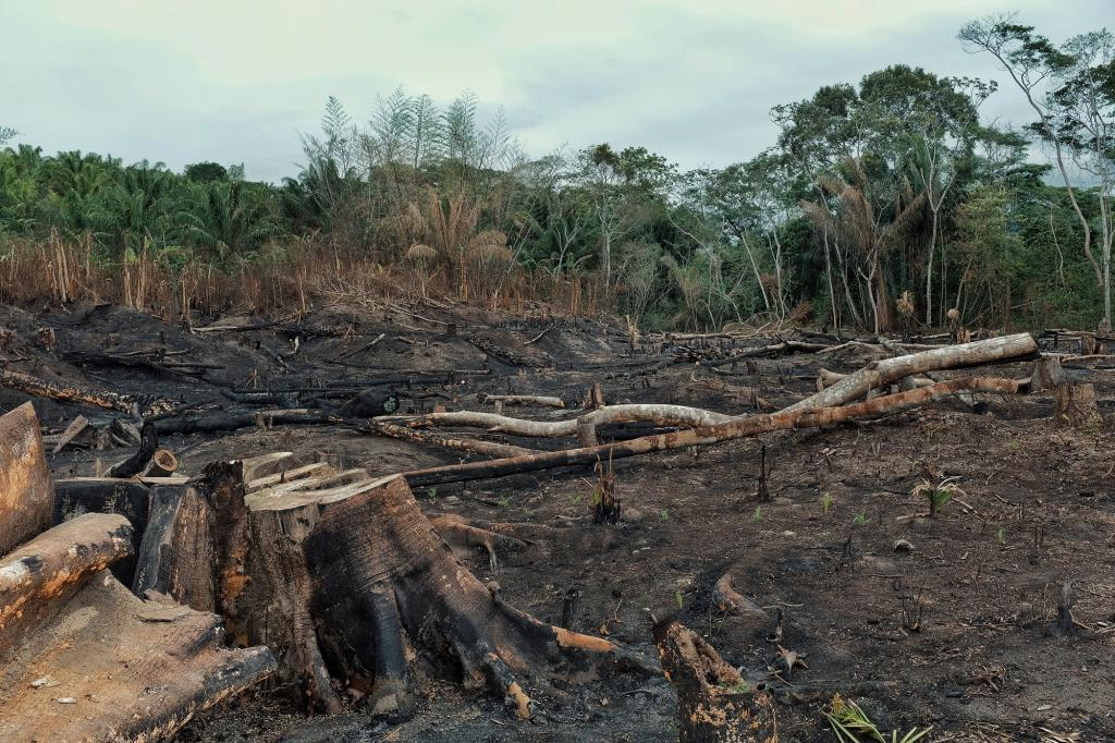Burnt rainforest in Borneo. Photo: Getty Images