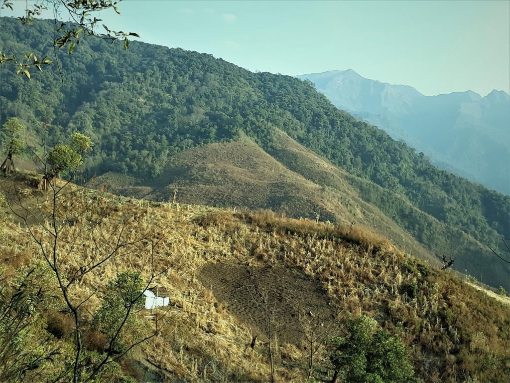 Jhum cultivation in Nagaland. Photo: Wikimedia Commons