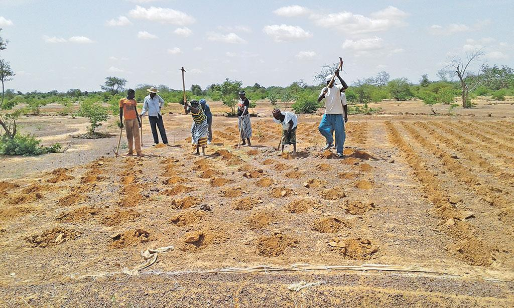 The practice of zai involves planting crops in small pits, which allows accumulation of runoff and nutrients and has helped reverse desertification