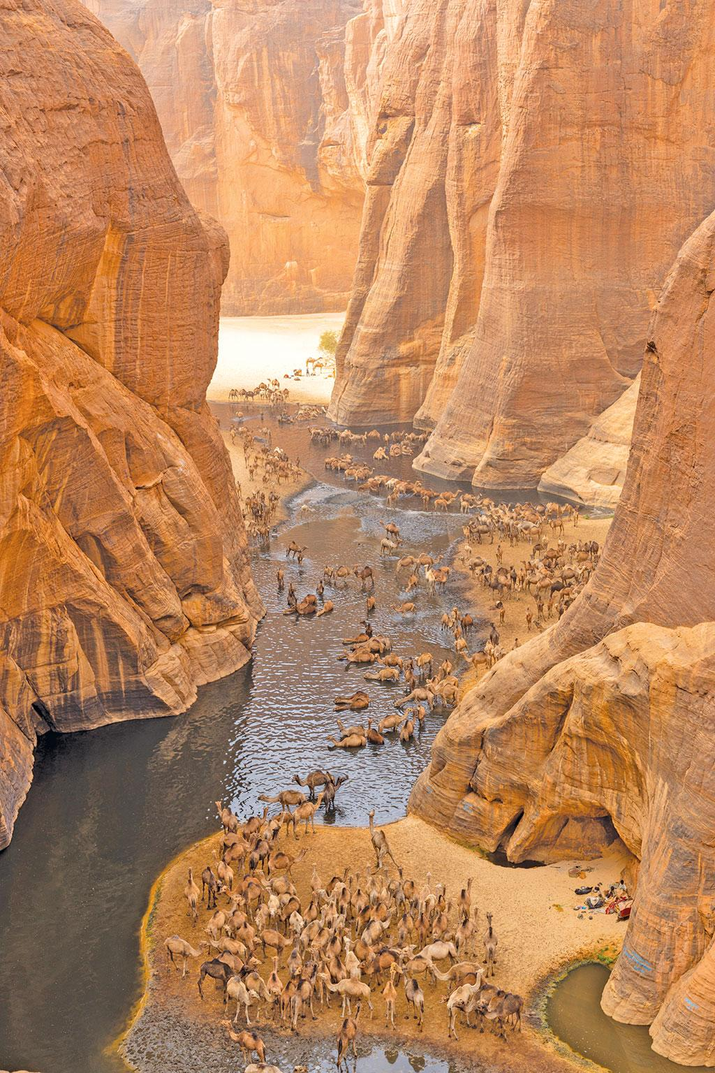 Guelta d'Archei in the Sahara desert, Africa. Gueltas are  freshwater pools formed due to seepage of underground water
