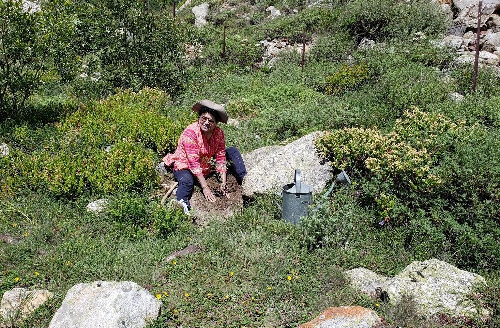 भोजपत्र के पौधों को रोपती हर्षवंती बिष्ट। फोटो: वर्षा सिंह