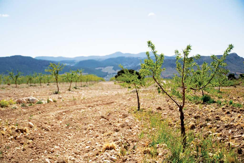 Spain is diversifying its crops and practising regenerative agriculture to prevent desertification