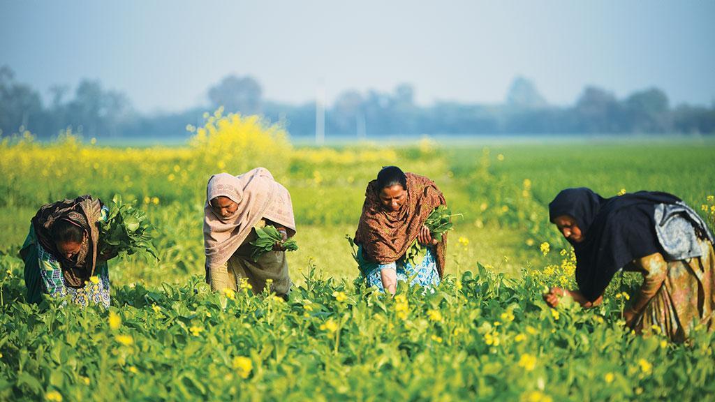 Dalit women farmers in Punjab. Photo: Adithyan PC