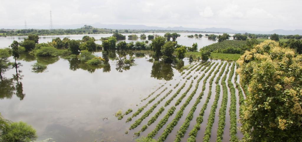 Farmland inundated because of the Sardar Sarovar Dam's backwaters. Photo: Shatakshi  Gawade