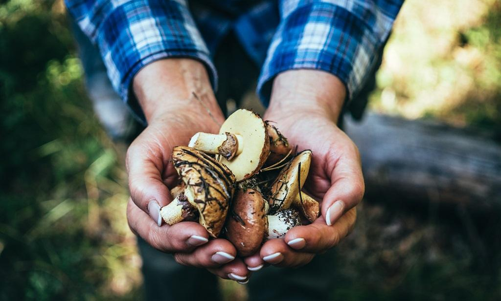 Mushrooms are known to have immense food value, medicinal flowers and are a good source of Vitamin D, proteins, minerals and anti-oxidants. Photo: Getty Images